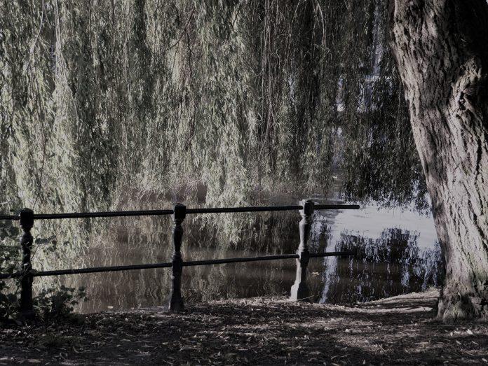 treurwilg in het park