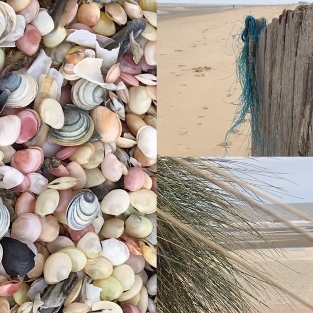 schelpen duinen en zand