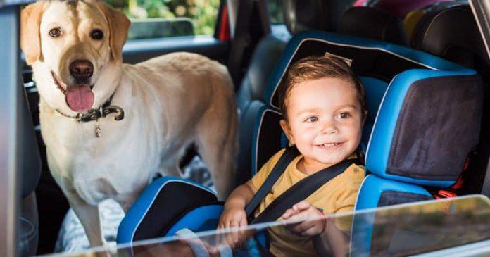 kinderen en huisdieren in de auto