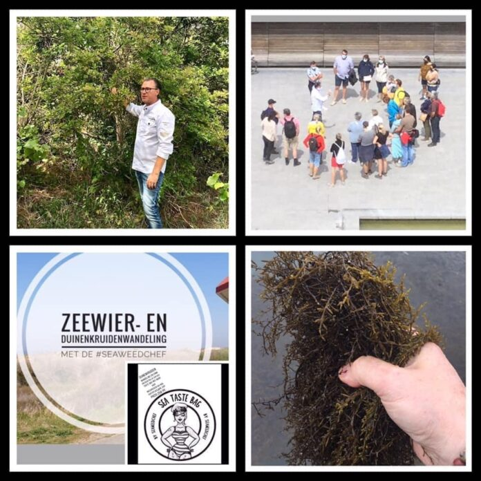 Zeewier -en duinenkruidenwandeling